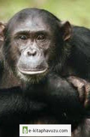 12.günümüzde Neden Hala Maymunlar Vardır