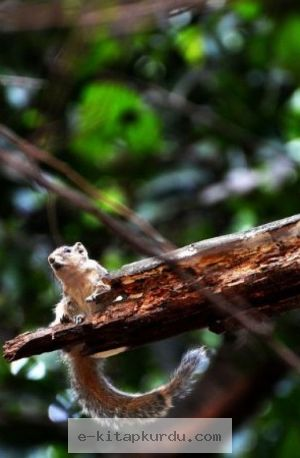 2 Algısal Yanılgı - Evrim Ağacı