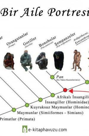 9.bir Türün X Milyon Yıl Boyunca Evrimleşmediği İddiaları