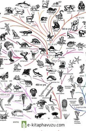 Bilim, Türler Arası Evrimi Kabul Etmiyor Mu