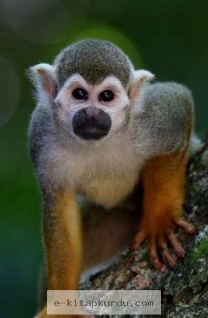 Geleneksel Halk İlaçlarında Primatların Yeri Genel Bakış - Evrim Ağacı