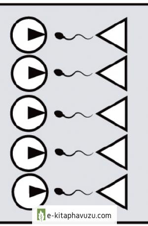 Koku - Feromonlar, Adet Döngüsü Senkronizasyonu