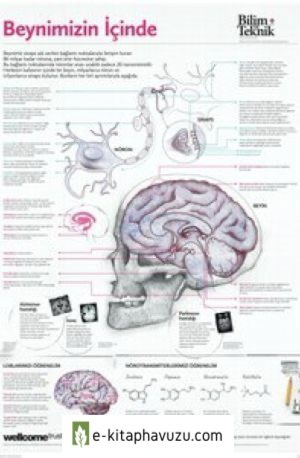 Beynimiziniçinde